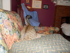 "Winnie dives for the ""mouse"" under the pillow (my fingers...ouch!)"